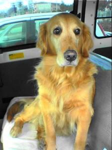 看板犬のサラ
